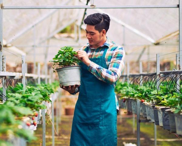 Formarse en Actividades Auxiliares en Viveros, Jardines y Centros de Jardinería