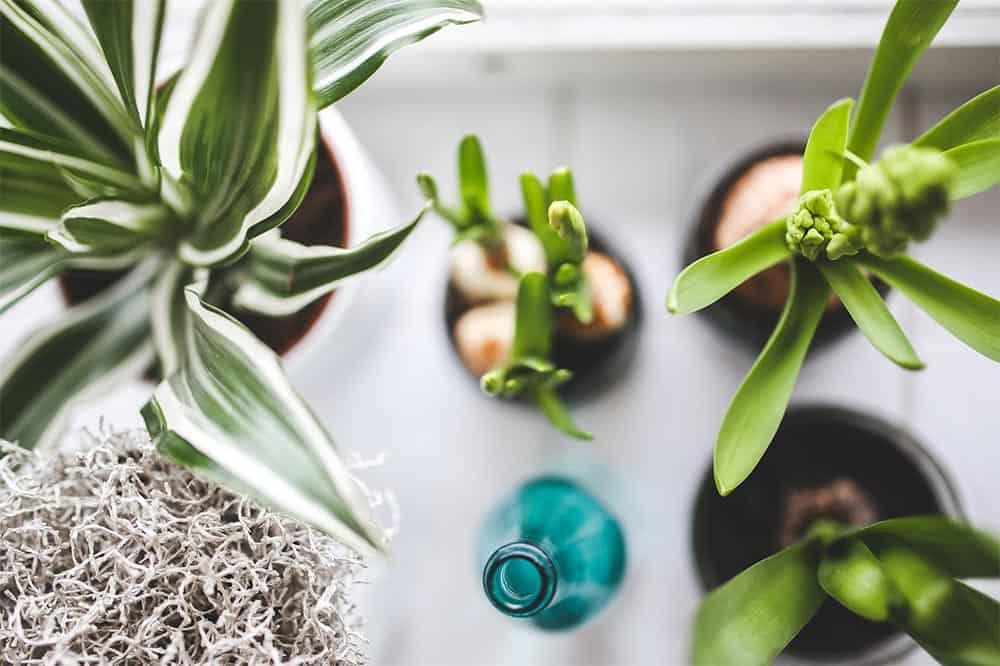 La jardinería y sus beneficios para el hogar
