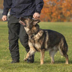 Estudiar el Máster en Educación Animal: Técnico Experto en Adiestramiento y Conducta Canina