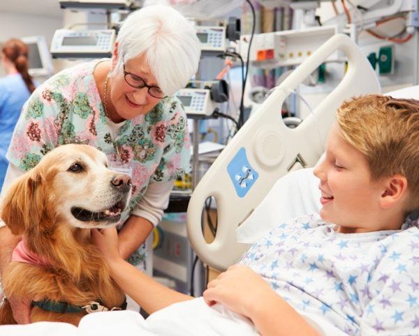 Estudiar el Experto Monitor de Terapia Asistida con Perros